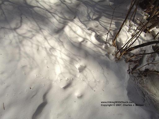 Mouse tracks in snow along the Arethusa Falls trail.